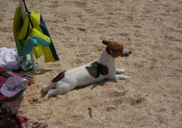 Wakacje z psem? – to możliwe